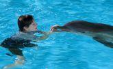 Delfines kaland 2. 2D